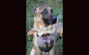Diesel, la chienne du Raid morte le 18 novembre 2015 lors de l'assaut à Saint-Denis.