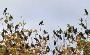 Les oiseaux et les papillons européens s'adaptent au réchauffement climatique en remontant vers le nord, mais pas suffisamment vite pour compenser l'augmentation des températures moyennes, démontre pour la première fois une étude publiée dimanche.