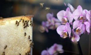La diminution de la population d'insectes pollinisateurs sauvages due à la perte de leur habitat et au réchauffement climatique menace la production agricole mondiale, met en garde jeudi une étude internationale publiée aux Etats-Unis.