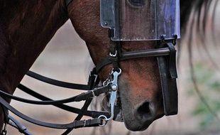 Un cheval de la police montée chilienne a ses yeux protégés pendant une manifestation, Santiago, Chili, le 13 mai 2009.