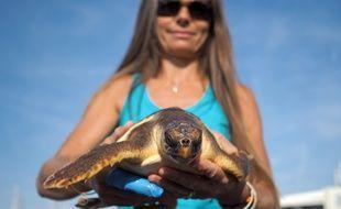 La tortue, recueillie en hypothermie au début de l'été, a repris du poil de la bête