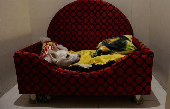Une literie confortable est mise à disposition des canidés.