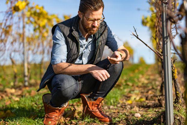 Pour obtenir leur AOC, les viticulteurs doivent respecter un certain nombre de règles, gages d'un savoir-faire et d'une origine bien définie.