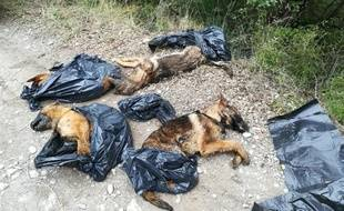 Les quatre chiens ont été découverts dans des sacs plastiques.