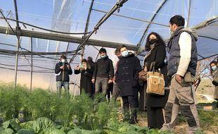 La mairie de Marseille souhaite développer l'agriculture urbaine