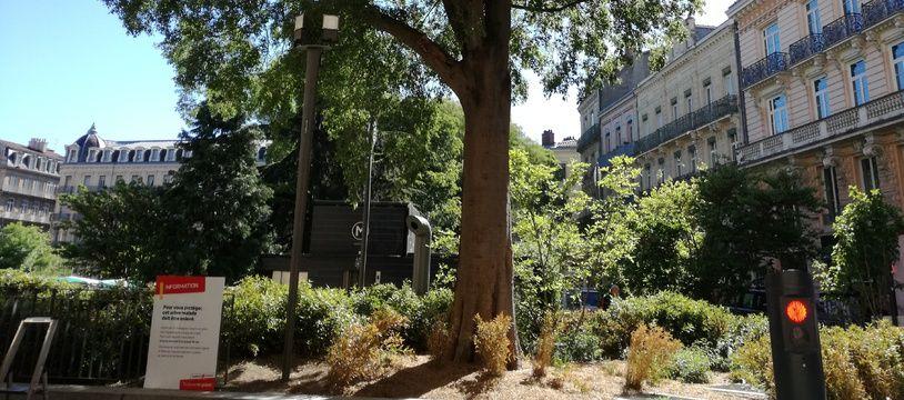 Victime d'un champignon, le micocoulier du square de Gaulle va être abattu les 15 et 16 mai.