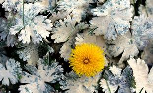 Un insecticide sous la forme de poudre blanche recouvrant la flore dans un champ d arbres fruitiers, en Isère (photo d'illustration)