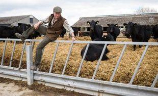 L'éleveur britannique Tony Bulgin, le 22 mars 2016 dans son exploitation de Thetford dans le Norfolk