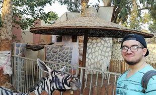 Mahmoud A. Sarhan soupçonne un zoo du Caire d'avoir peint un âne en zèbre.