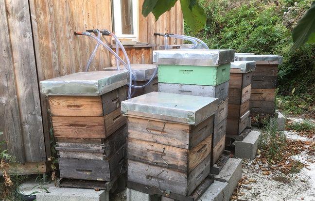 Les ruches sont reliées aux masques via un tuyau qui envoie l'air à l'intérieur.