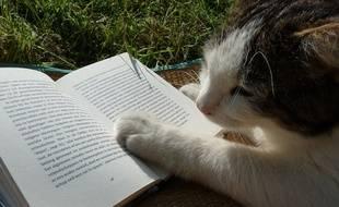 Tu seras la star littéraire de la rentrée, mon chat
