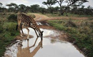 L'Unesco a appelé lundi la Tanzanie à ne pas faire passer le développement économique avant la sauvegarde de son patrimoine, à propos d'un projet controversé de route traversant le parc national du Serengeti.