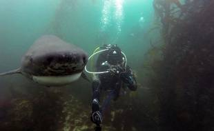 Une plongeuse fait un selfie avec un requin.