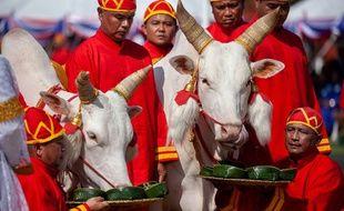 Cérémonie du Labour royal à Bangkok (Thaïlande) le 14 mai 2018.