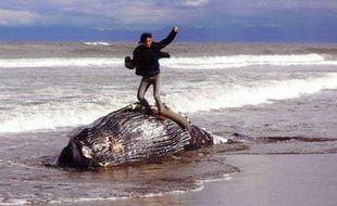 La photo d'un homme sur une baleine morte a provoqué une polémique au Japon.