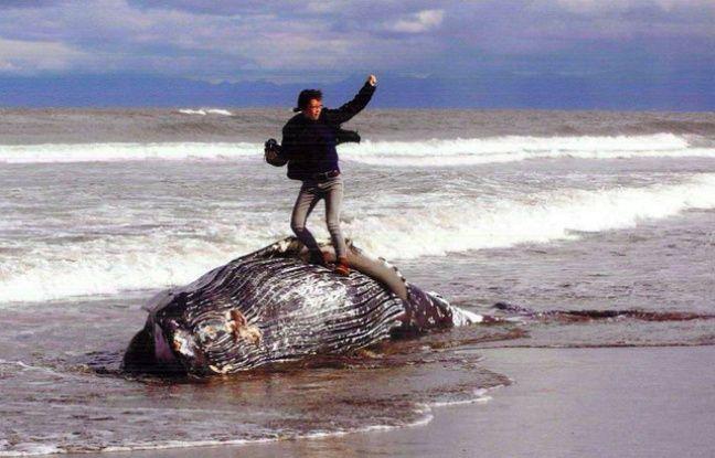japon  la photo d u0026 39 un homme sur une baleine morte d u00e9clenche une vague de critiques