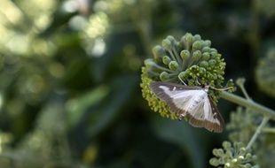 Nicolas Hulot présente les 90 mesures de son plan biodiversité ce mercredi 4 juillet.