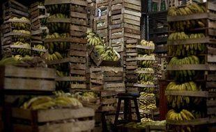 Un entrepôt de bananes en Amérique du Sud en mars 2010