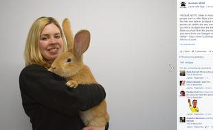 Capture d'écran d'une photo postée sur Facebook par la société écossaise de protection des animaux qui propose d'adopter un lapin géant.