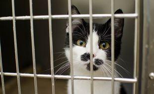 Un chat en cage (Illustration)