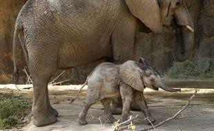 Trois éléphants coincés dans un réservoir d'eau en Chine ont été secourus à l'aide d'une pelleteuse