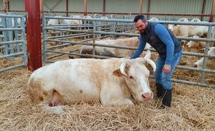 Jean-Marie Goujat devant sa vache Idéale, qui figure sur les affiches du salon de l'agriculture 2020.