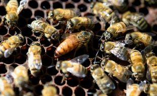 Une reine entourée d'abeilles.