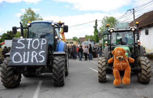 Pyrénées: Après l'attaque d'une ourse contre un randonneur, la préfète de l'Ariège rassurante