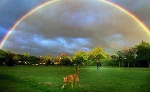 Paradis des chiens, illustration.