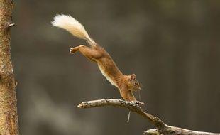 Illustration d'un écureuil