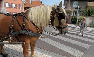 Illustration. Un cheval de trait. Le 06 09 2009