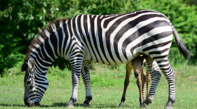 Un vœu de la majorité bordelaise contre les cirques avec animaux sauvages