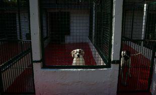 Une chienne dans son enclos au refuge de la SPA de Lorient le 17 avril 2020.