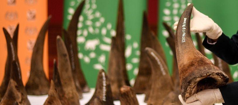 Une saisie record de cornes de rhinocéros, d'une valeur estimée à 10,5 millions d'euros a été réalisée en Malaisie.