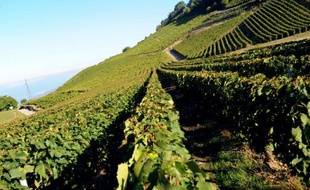 Les coopératives viticoles ont demandé mercredi une augmentation des prix, notamment pour les vins d'entrée de gamme, alors que la production est prévue en baisse cette année par rapport à 2009.