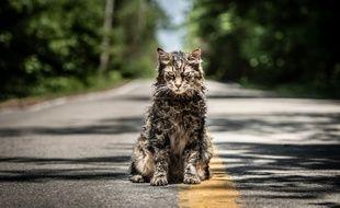 Le chat zombie de «Simetierre» de Kevin Kölsch et Dennis Widmyer