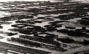Des champs ostréicoles en Bretagne. (illustration)