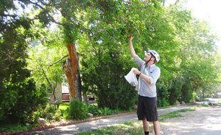 Jeff Wanner, l'un des créateurs de l'application Falling Fruit, récolte un mûrier à Boulder, Colodrado.