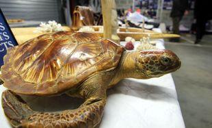 Illustration d'une tortue saisie par les douanes françaises.