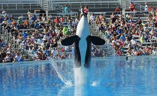Une orque à un spectacle de SeaWorld à San Diego, en Californie, le 9 octobre 2015.