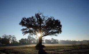 Un chêne, le 10 décembre 2013 à Hede-Bazouges dans l'ouest de la France