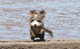Un chien, sur une plage (illustration)
