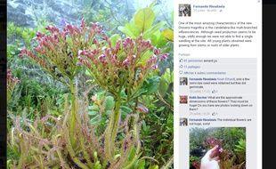 Capture écran du compte Facebook de Fernando Rivadavia avec la drosera magnifica, 25 juillet 2015.