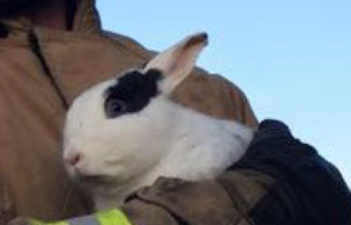 Le lapin volant va pouvoir se remettre de ses émotions. – DR