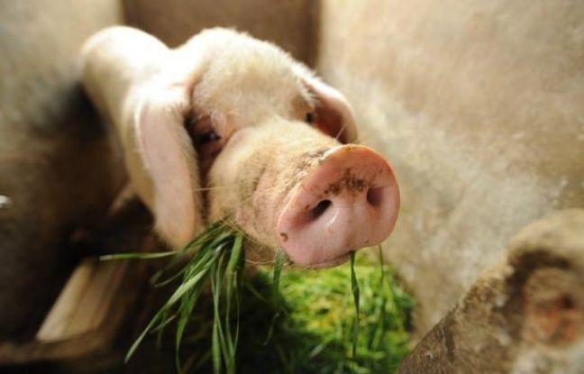 Des responsables de la santé et la police enquêtaient mercredi sur la mort mystérieuse de plusieurs centaines de porcs et de chiens à Yanshi, dans le centre de la Chine, ont déclaré les autorités.