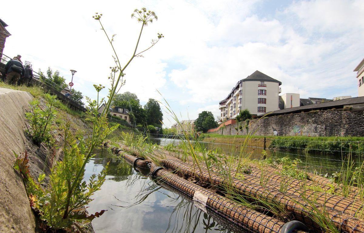 Des radeaux flottants ont été végétalisés et installés sur la Vilaine, à Rennes. Ici avant leur départ vers la place de la République. – C. Allain / APEI / 20 Minutes