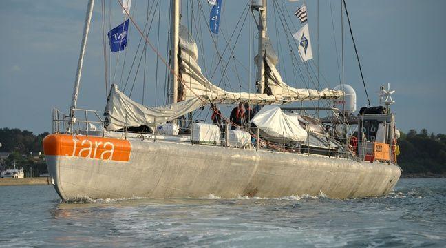Côte d'Azur: Un chercheur azuréen crée le Facebook du plancton