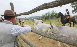 """Des cow-boys """"butteri"""" italiens gardent des vaches de la race Maremmana."""
