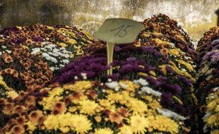 Illustration de chrysanthèmes dans un cimetière.