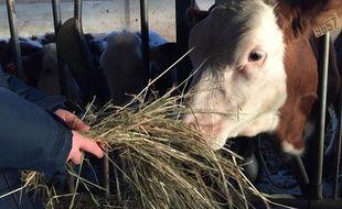 Illustration d'un élevage de vaches laitières dans une ferme en Savoie